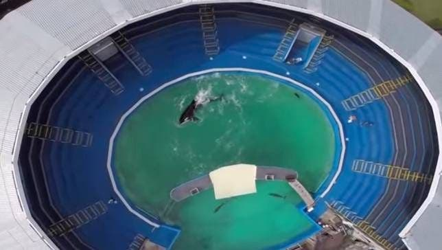 lolita-orca
