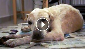 ol-boy-perro-abandonado-muere-dignidad