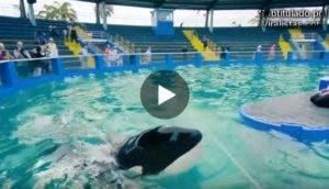 orca-lolita-secretos