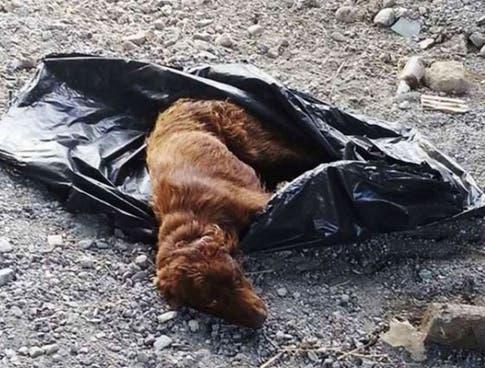 perro-basura10