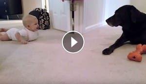 perro-bebe-gateando