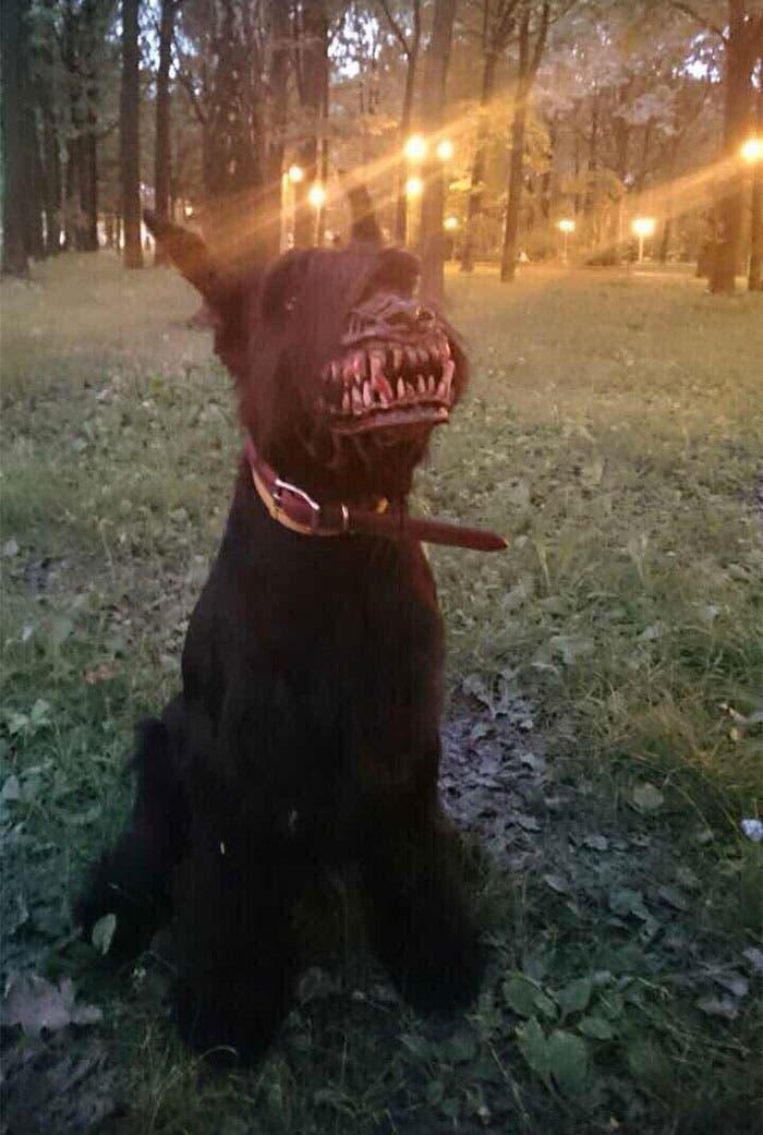 perro-bosal