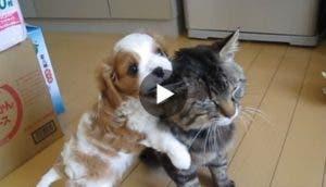 perro-conoce-a-su-hno-gato