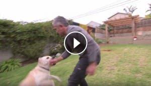 perro-muerde-a-cesar-millan