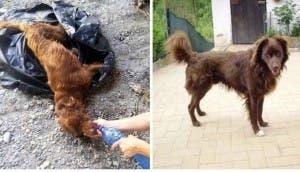 perro-rescatado-basura-1-año-despues