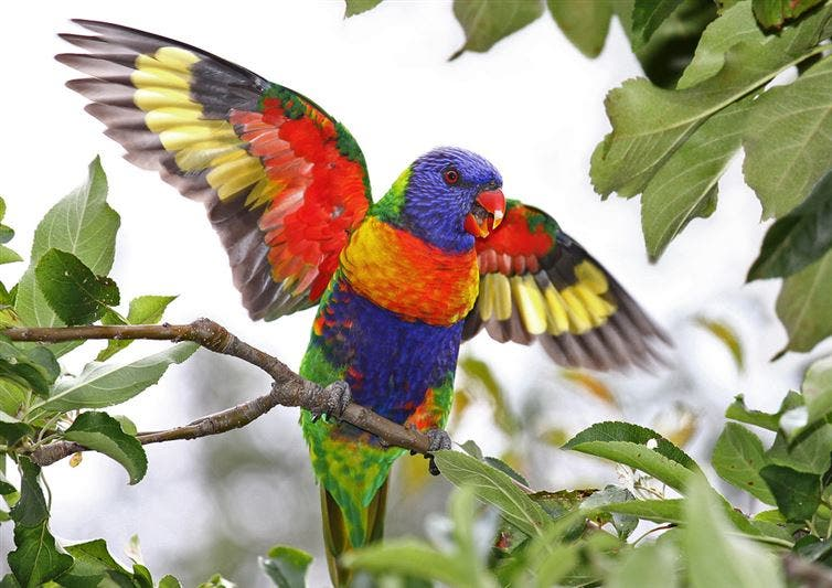 16animales-coloridos-increibles
