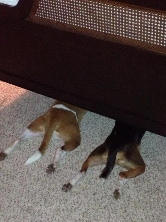 Estos perros han tenido las mejores ideas para ocultarse