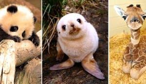animales-bebe