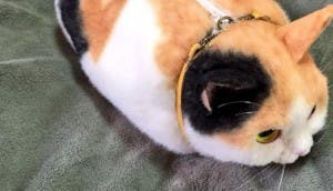 bolsa de gato id