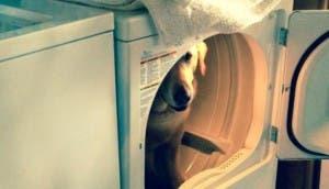 escondite-fallido-de-perros