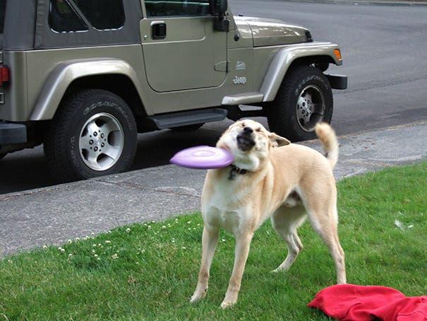 fails de perros 12