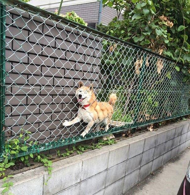 fails de perros 17