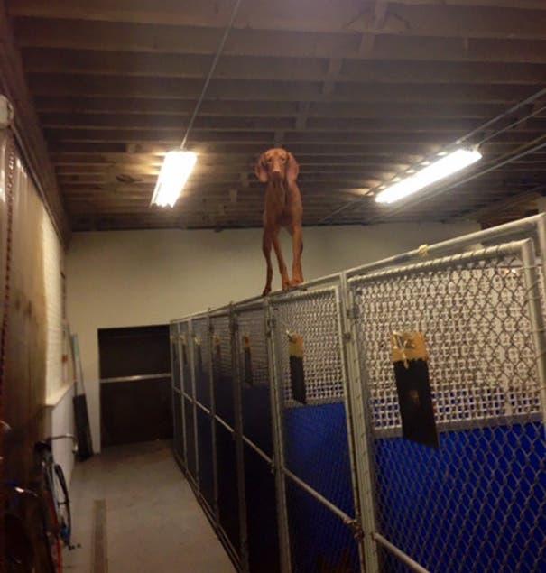17 perros que inmediatamente se arrepintieron