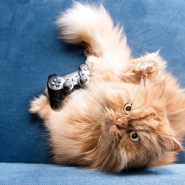 garfi-gatito-malhumorado-14