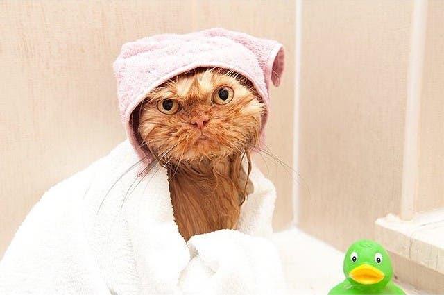 garfi-gatito-malhumorado-16