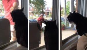 gato-recibe-nuevo-miembro