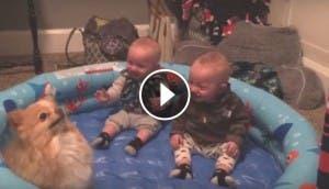 gemelos-que-no-pueden-parar-de-reir