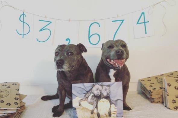 hermanos pitbull 3