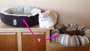 logica de gatos 16