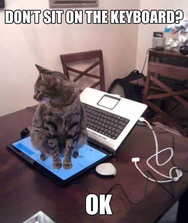 15 cómicos ejemplos de cómo funciona la lógica de un gato