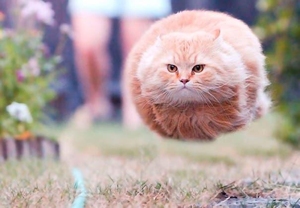 momento exacto gatos 1