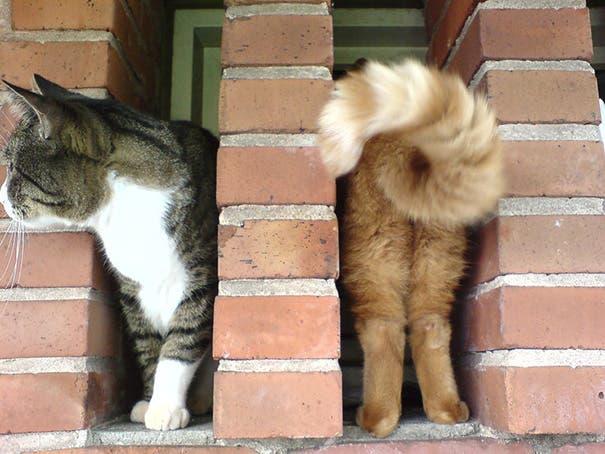momento exacto gatos 10