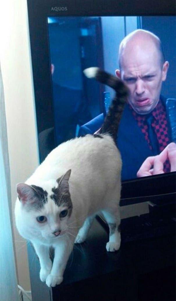 momento exacto gatos 11