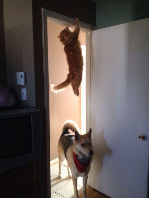 momento exacto gatos 12