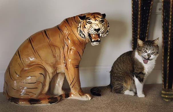momento exacto gatos 13