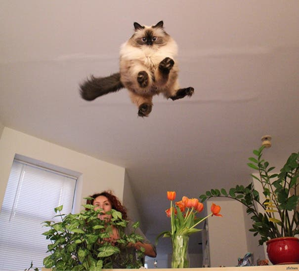 momento exacto gatos 14