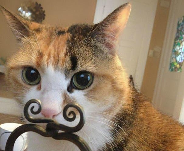 momento exacto gatos 16