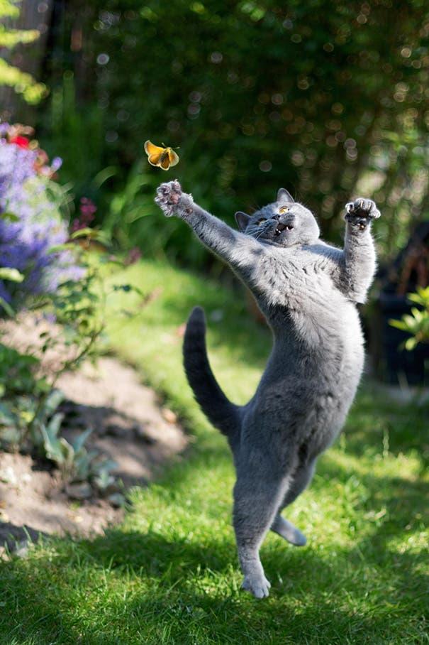 momento exacto gatos 18