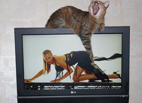 momento exacto gatos 19