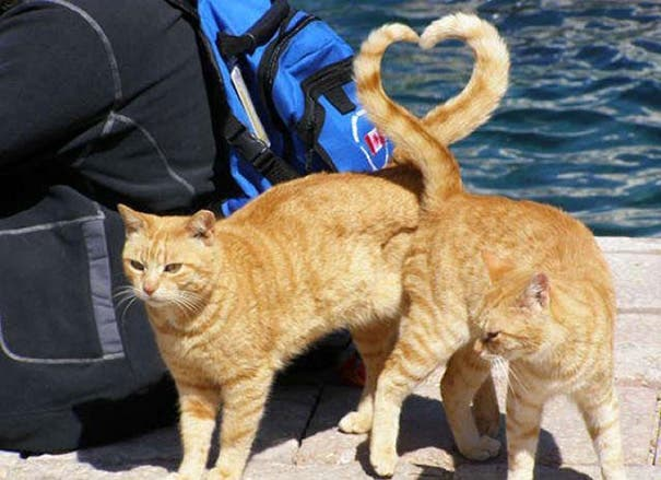 momento exacto gatos 2