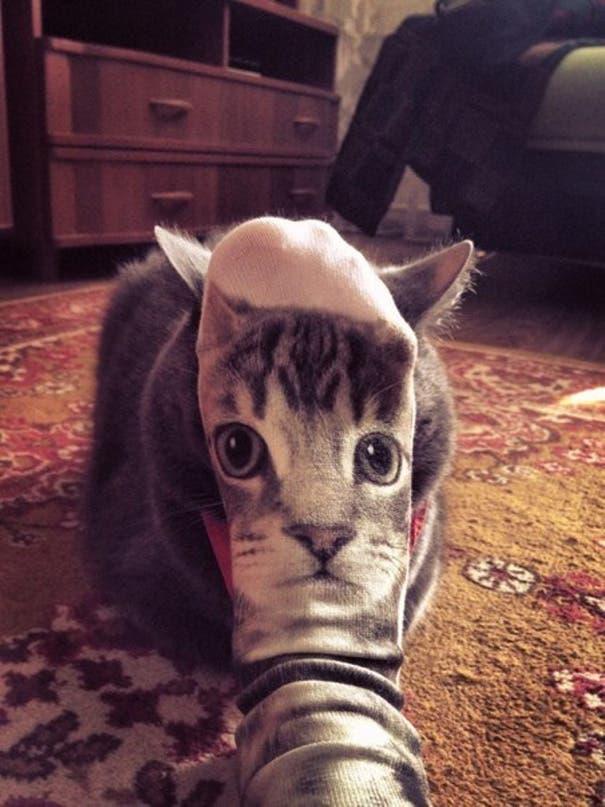momento exacto gatos 21