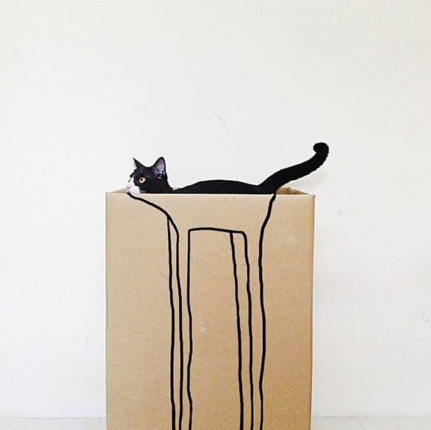 momento exacto gatos 22