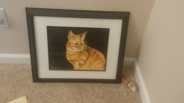 momento exacto gatos 3