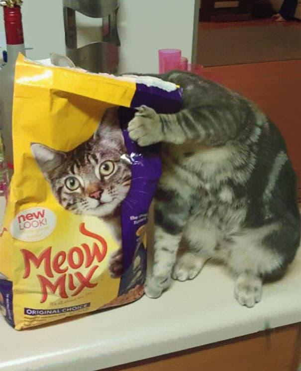 momento exacto gatos 5
