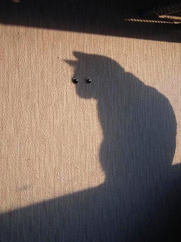 momento exacto gatos 8