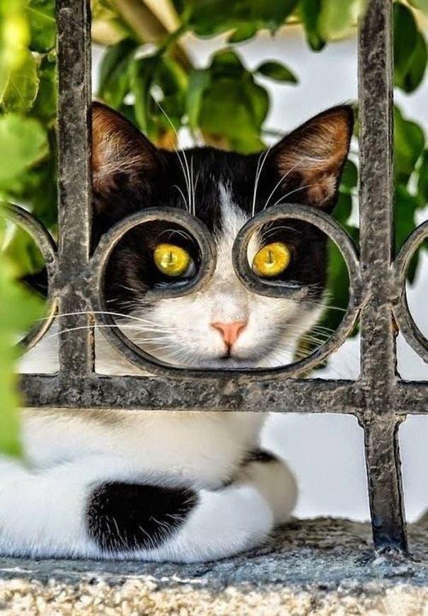 momento exacto gatos 9