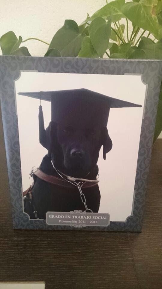 orla-perro-graduacion
