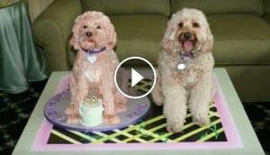 pastel perro