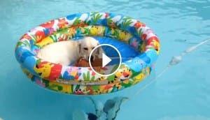 perro-descansando-piscina-peluche -