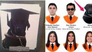 perro-guia-graduacion-universidad-