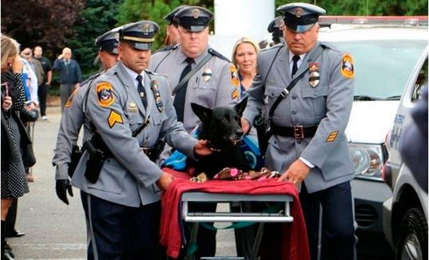 Mira la emotiva despedida que recibió este perro K9 tras ser diagnosticado con cáncer terminal