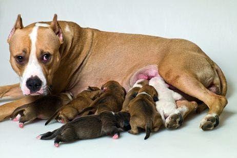 perros-cachorritos13