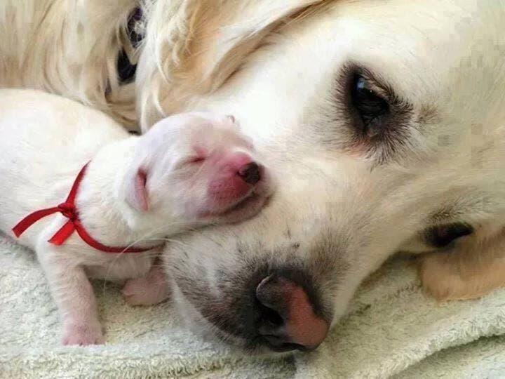 perros-cachorritos4