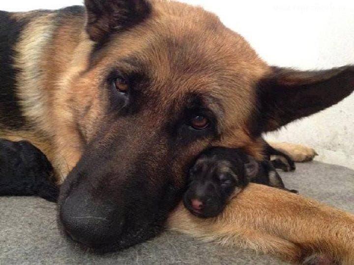 perros-cachorritos5