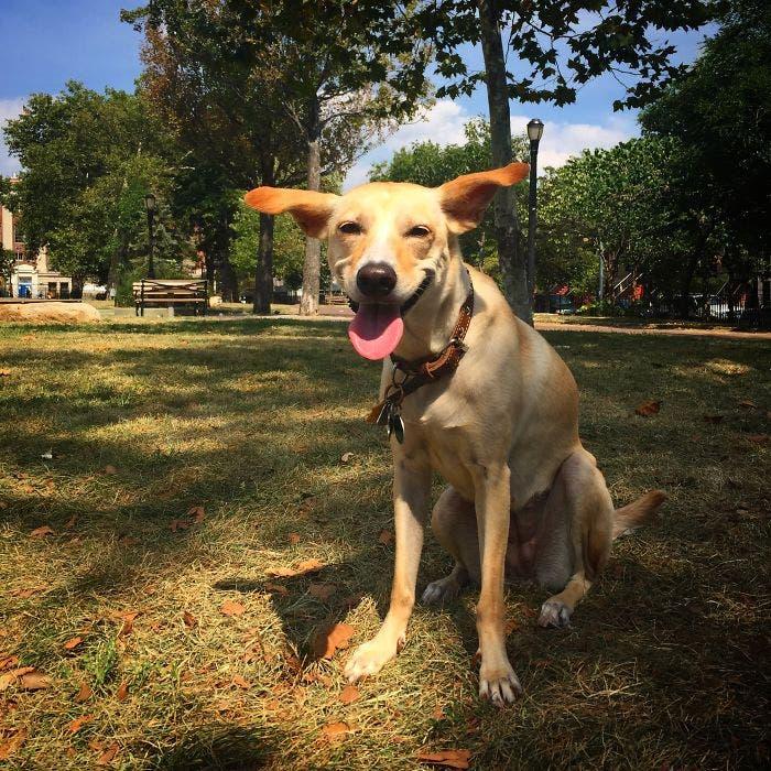 sonrisas de perros 19