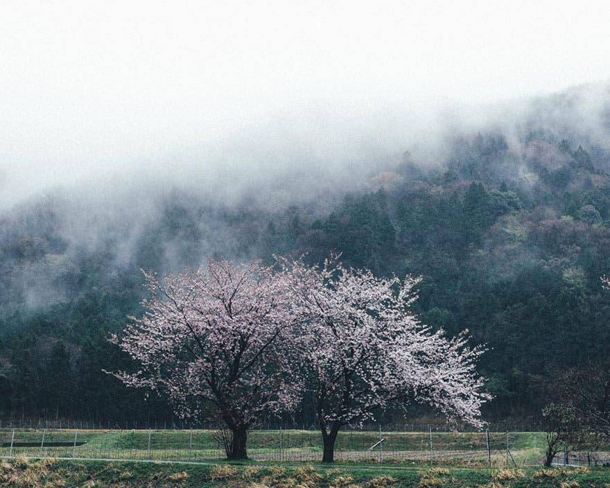 vida en japon 3